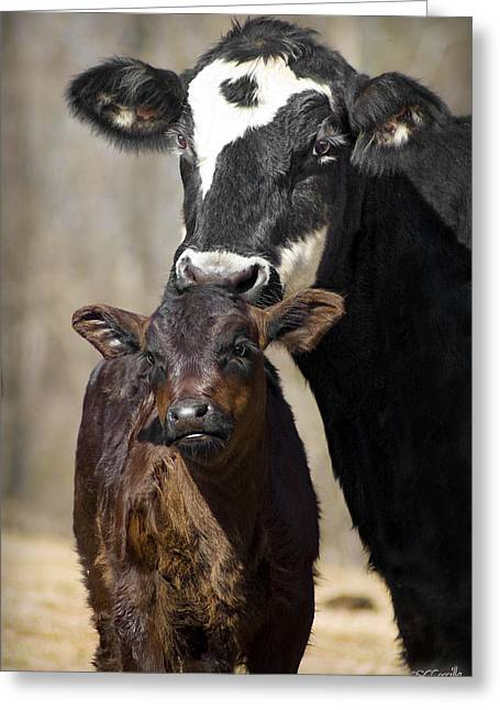 Cow And Calf Greeting Card by Elizabeth Vieira