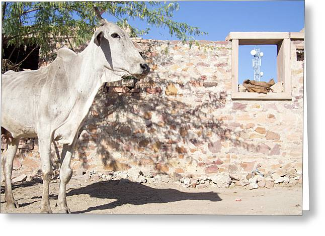 Cow And Stonewall With Communications Greeting Card