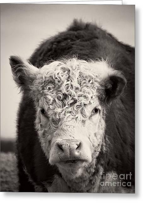 Cow Greeting Card by Edward Fielding