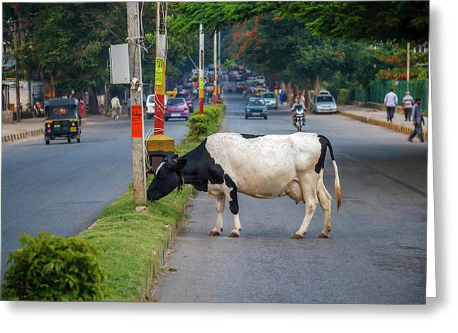 Cow Grazing On The Street, Bangalore Greeting Card by Ali Kabas