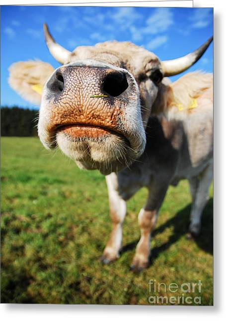 cow Greeting Card by Hannes Cmarits