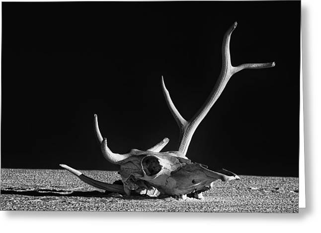 Cow Skull And Antlers Greeting Card