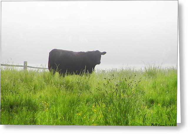 Cow In Fog Greeting Card by Bill Cannon