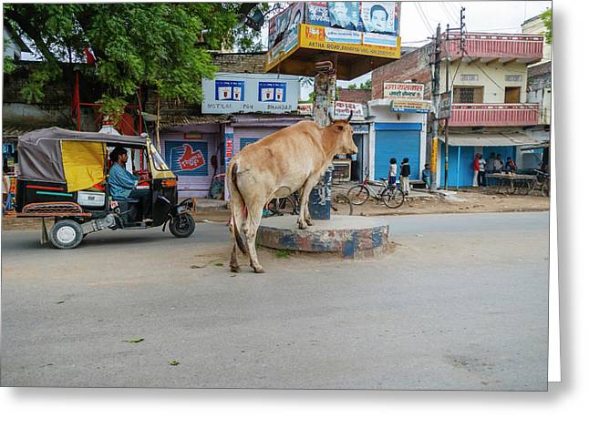 Cow In The Middle Of The Street Greeting Card