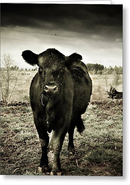 Cow In The Winter Pasture  Greeting Card by Gray  Artus