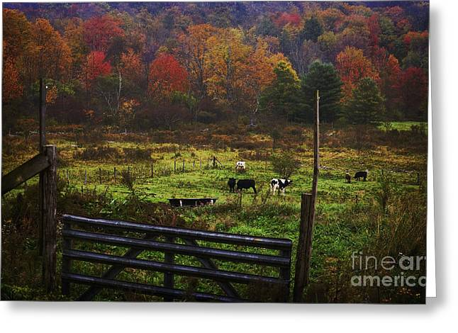 Greeting Card featuring the photograph Cow Pasture In Autumn by Debra Fedchin