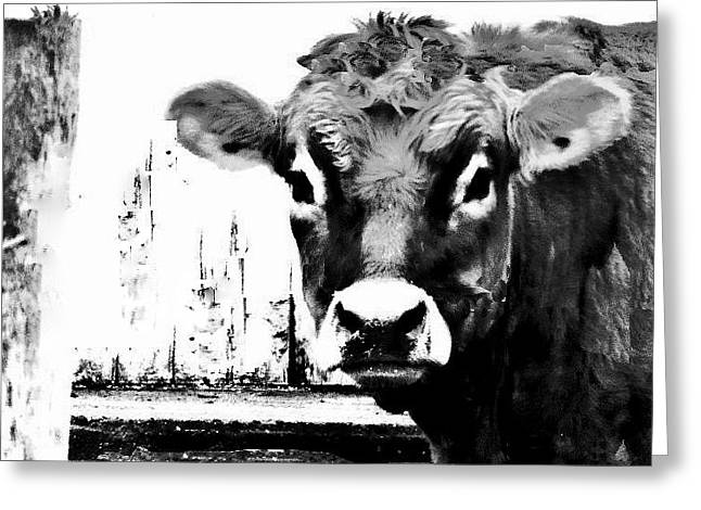 Cow  Pen And Ink Greeting Card