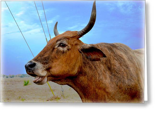 Greeting Card featuring the photograph Cow Photo 3 by Amanda Vouglas