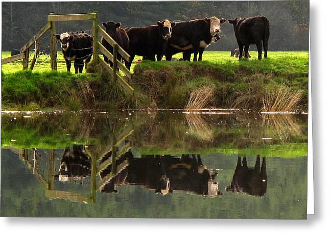 Greeting Card featuring the photograph Cow Reflections by Suzy Piatt