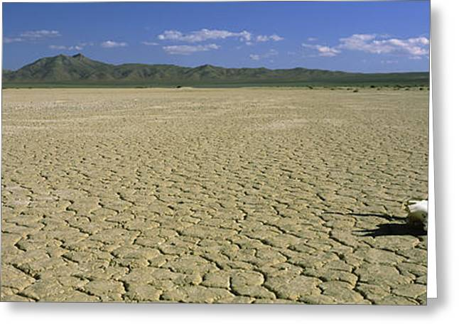 Cow Skull At Mojave Desert, California Greeting Card by Panoramic Images