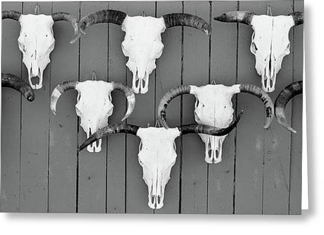 Cow Skulls Hanging On Planks, Taos, New Greeting Card by Panoramic Images