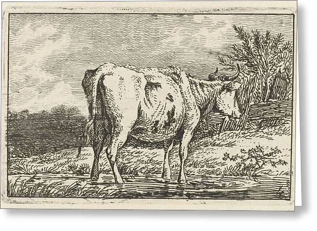 Cow Standing In A Puddle, Print Maker Anthony Oberman Greeting Card by Artokoloro