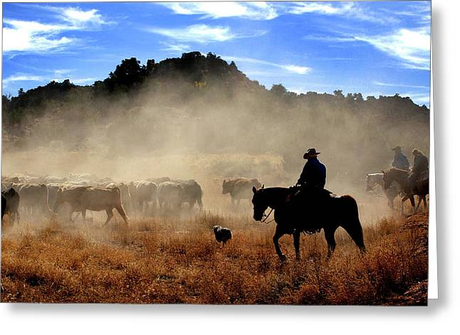 Cowboys Driving Cattle, Moab, Utah, Usa Greeting Card