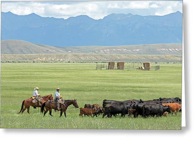 Cowboys Herding On A Cattle Ranch Greeting Card