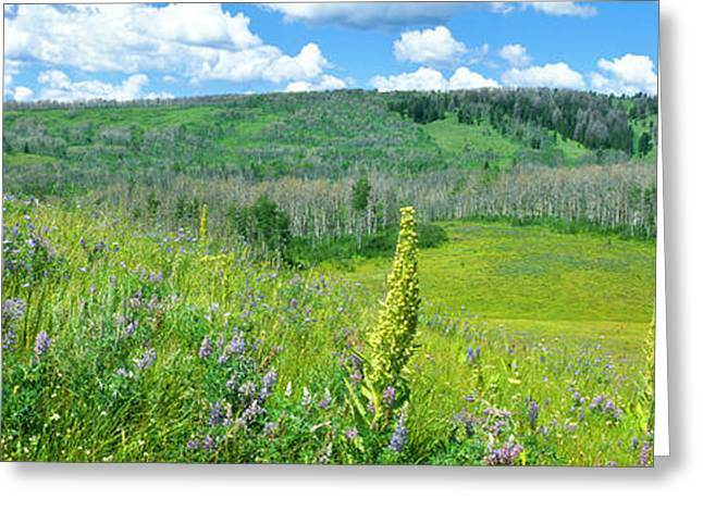 Cowparsnip, Lupine And Larkspur Greeting Card by Panoramic Images