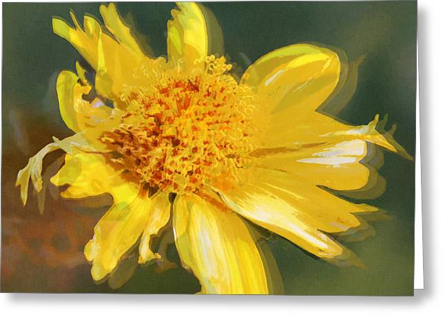 Cowpen Daisy No. 4 Greeting Card by Susan Schroeder