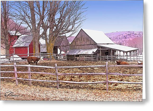 Cows At Jenne Farm Greeting Card