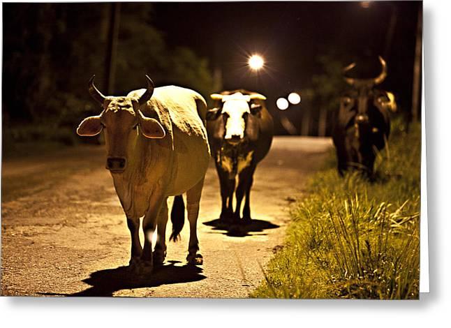 Cows Coming Home Greeting Card by Sarita Rampersad