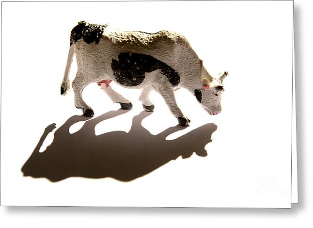 Cows Figurine Greeting Card