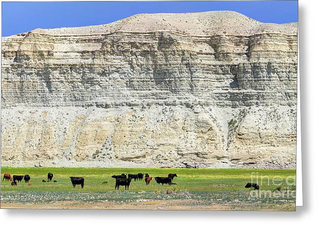 Grazing Cows Green River Cliffs Thunderstorm Greeting Card by Gary Whitton