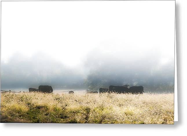 Cows In A Foggy Field Greeting Card by Bill Cannon