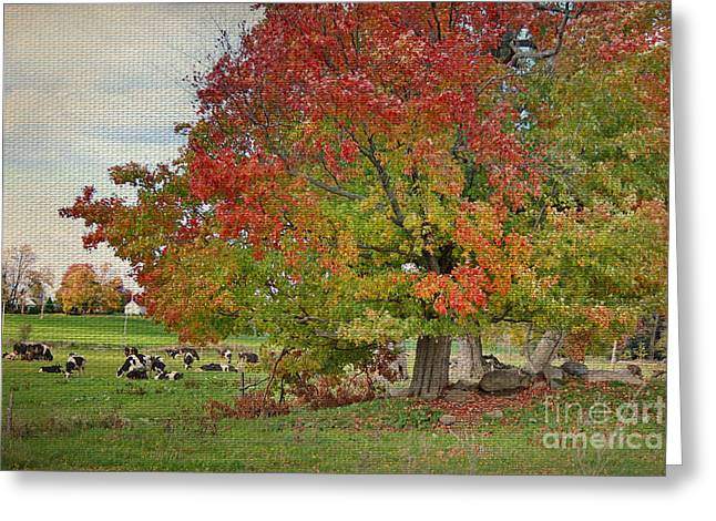 Cows In Autumn Greeting Card by Deborah Benoit