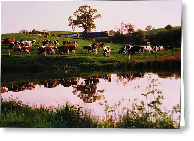 Cows In The Canal Greeting Card