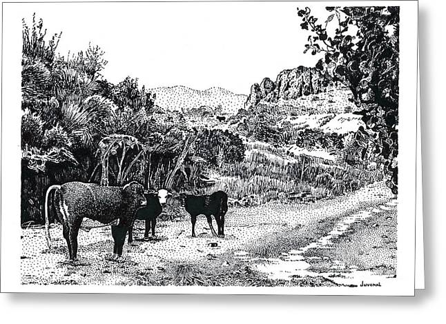 Cows In The Canyon Greeting Card by Joseph Juvenal