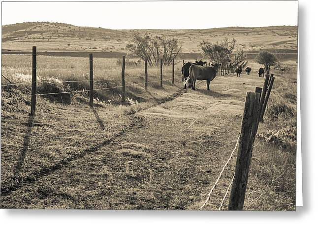 Cows In The Lane Greeting Card