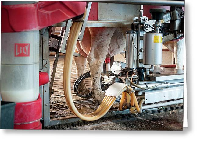 Cow's Udder In Milking Machine Greeting Card