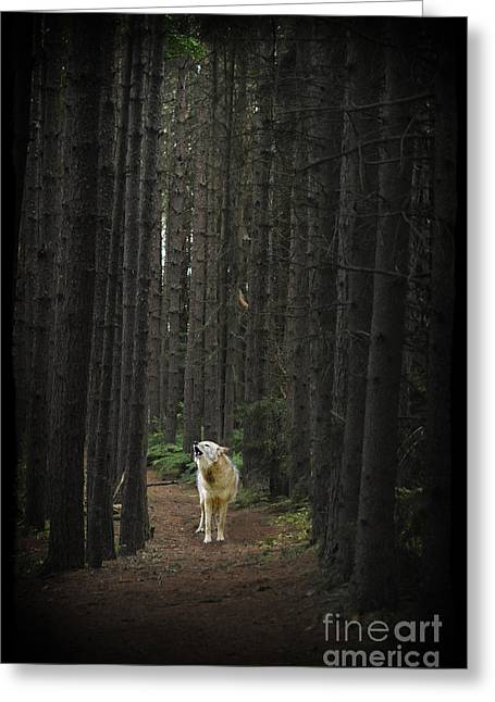 Coyote Howling In Woods Greeting Card by Dan Friend