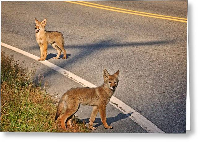 Greeting Card featuring the photograph Coyotes At The Crossroads by Peggy Collins