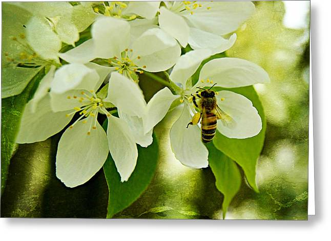 Crab-apple Blossoms And Honey Bee In Paint Greeting Card