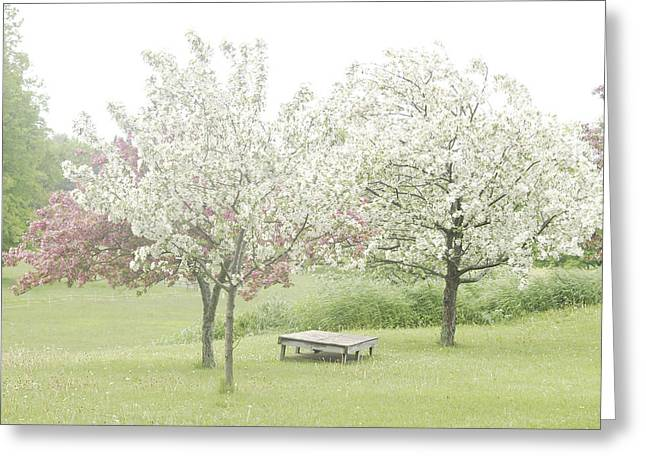 Crab Apple Blossoms Greeting Card by Susan Crossman Buscho