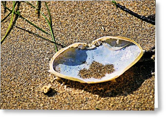 Greeting Card featuring the photograph Crab Carapace by Bob Wall