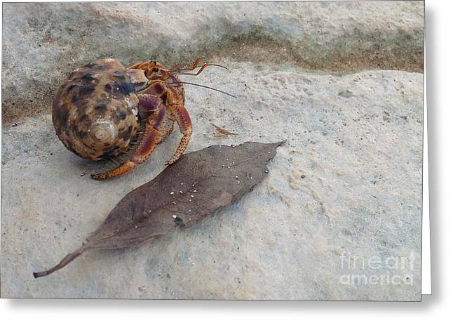 Crab In Shell Greeting Card by M Valeriano