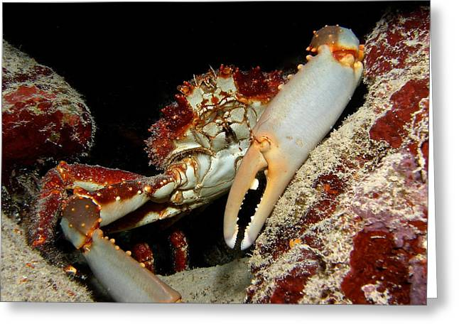 Crab Pose Greeting Card by Nina Banks