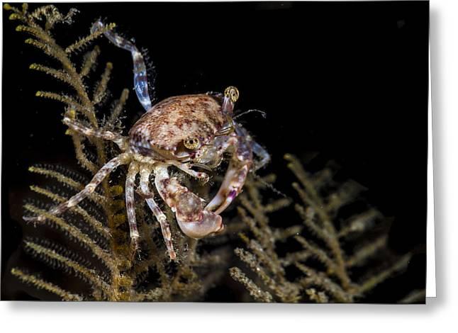 Crab Sitting At Night Greeting Card
