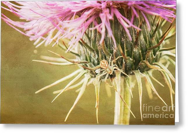 Crab Spider On Thistle Greeting Card by Marianne Jensen
