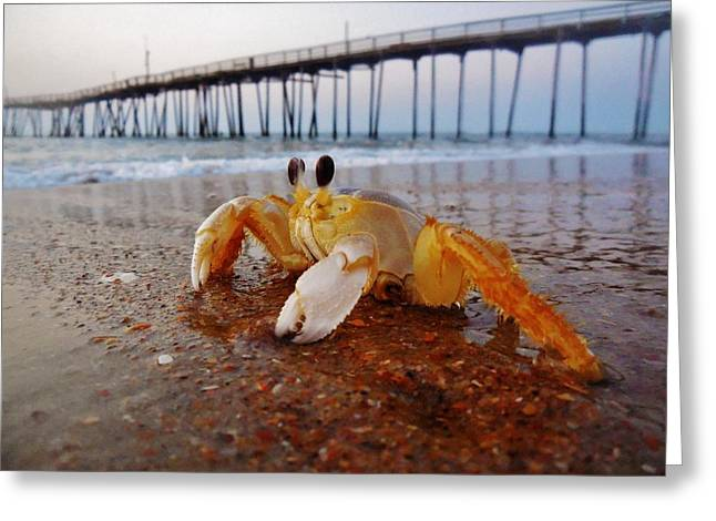 Crab Waiting On The Sunrise Avon Pier Greeting Card