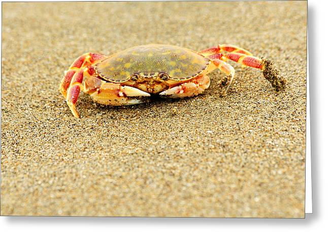 Crab Walk Greeting Card by Rebecca Adams