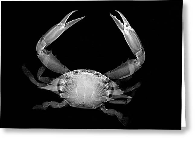 Crab Greeting Card by William A Conklin