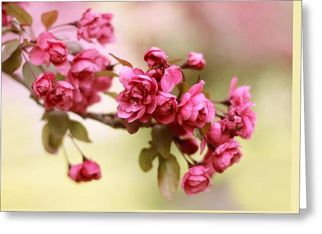 Crabapple Blossoms Greeting Card by Jessica Jenney