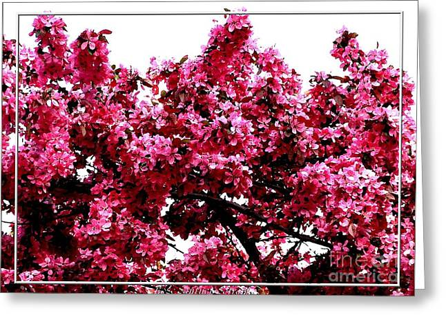 Crabapple Tree Blossoms Greeting Card by Rose Santuci-Sofranko