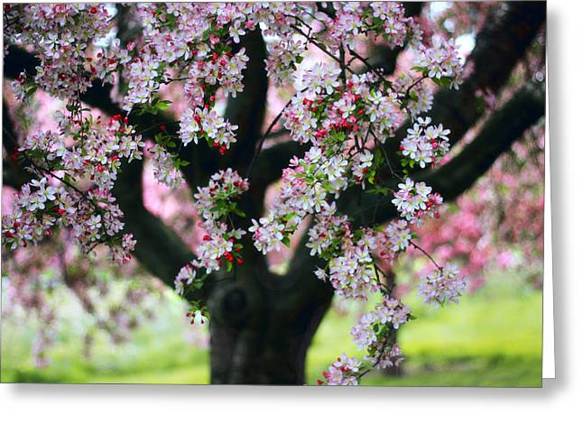 Crabapple Tree Greeting Card by Jessica Jenney
