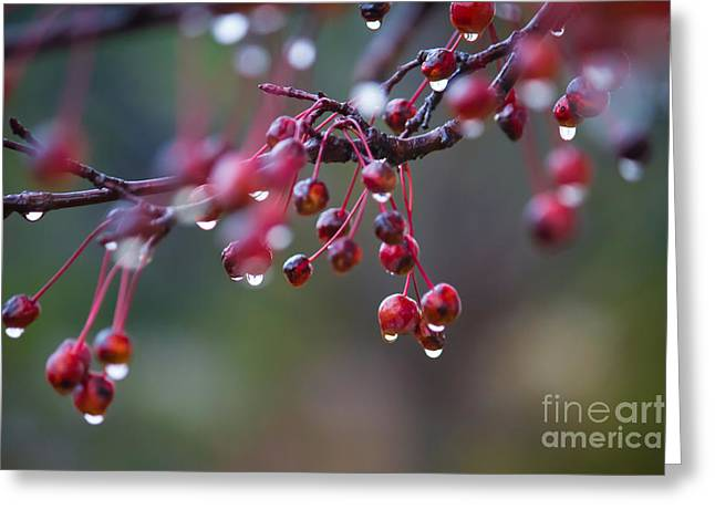 Crabapples In The Mist Greeting Card