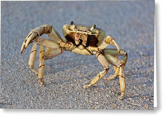 Crabby Greeting Card by Michelle Wiarda