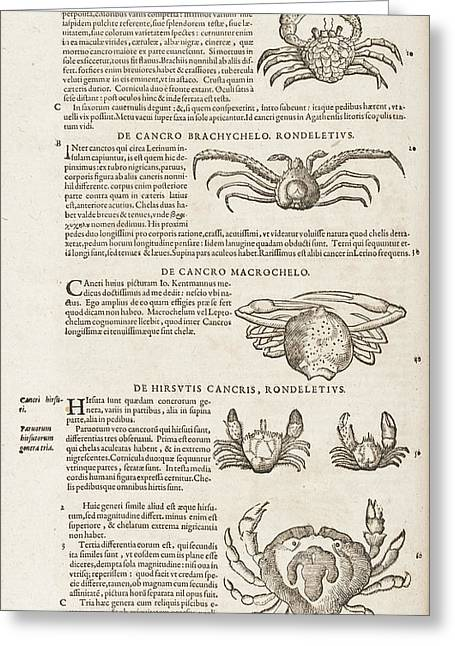 Crabs Greeting Card by British Library