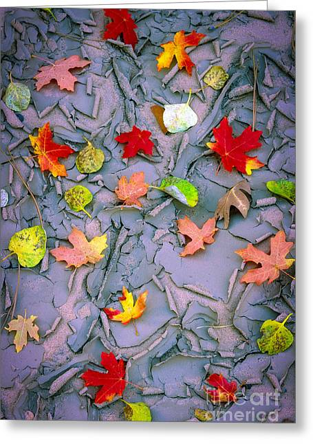 Cracked Mud And Leaves Greeting Card