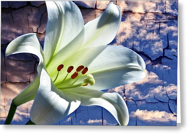 Greeting Card featuring the photograph Cracked Paint Easter Lily by Marjorie Imbeau